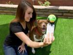 Простые правила съёмки собак.